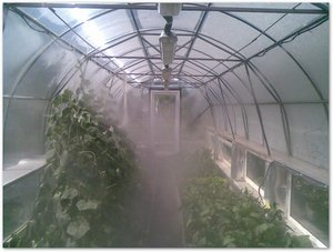 Система туманообразования для теплиц Киев
