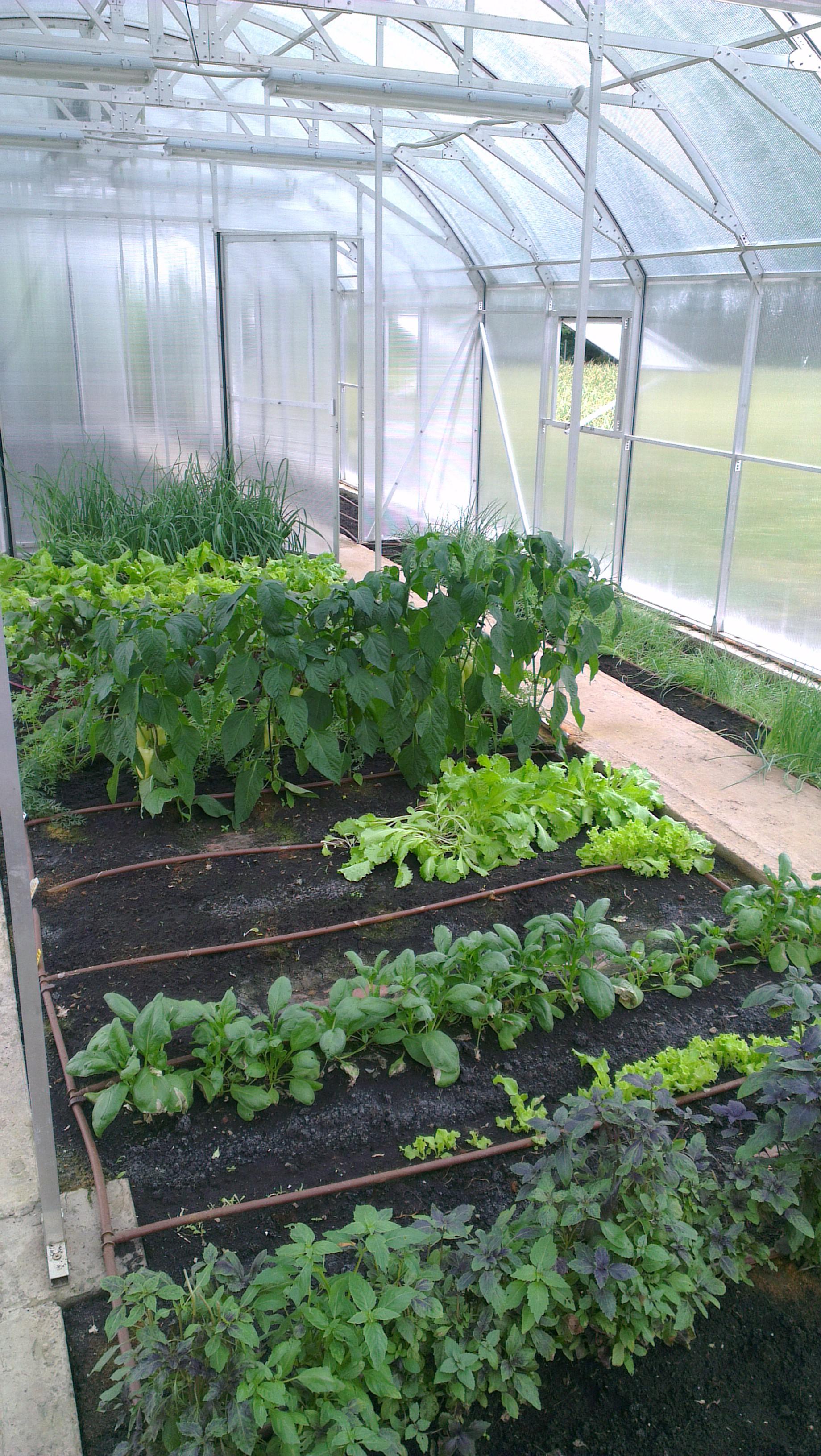 как сделать капельный полив из бутылки для комнатных растений